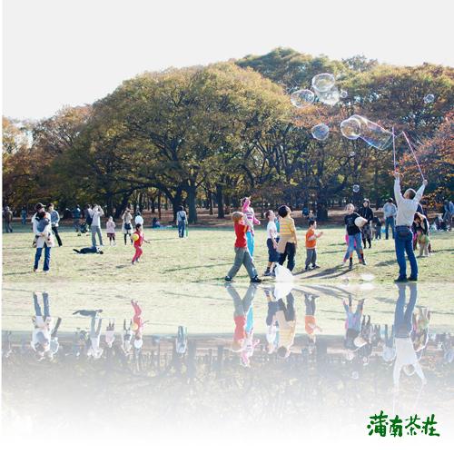2010-shincha.jpg